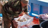 foto di Pescaturismo